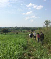 field-visit-in-hoima_mb